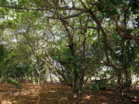 520_wooded-area-1