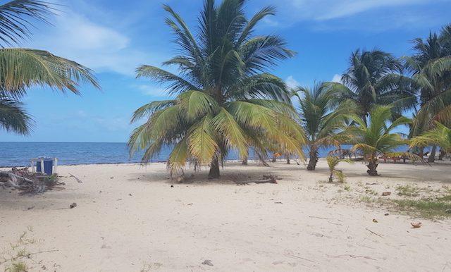 ND240 - Beachfront parcel 3441 - placencia village